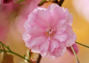 Blüte pixabay